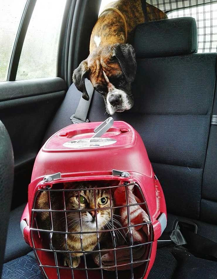 A Cat Travelling In A Car With A Cage