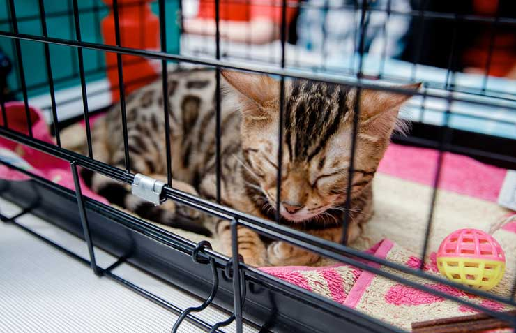 Let The Cat Sleep In The Cage